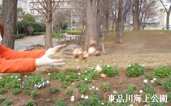 tulip-nage.jpg