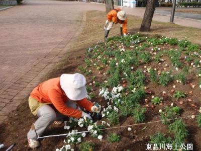 tulip-ue.jpg