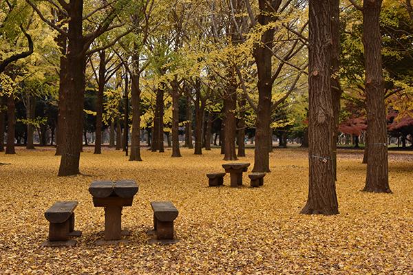 2014.12.04.代々木公園 DSC_0668
