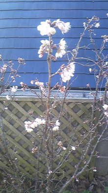 占い師響春のつぶやき-100225_080247.jpg