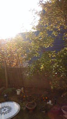 占い師響春のつぶやき-101119_080951.jpg