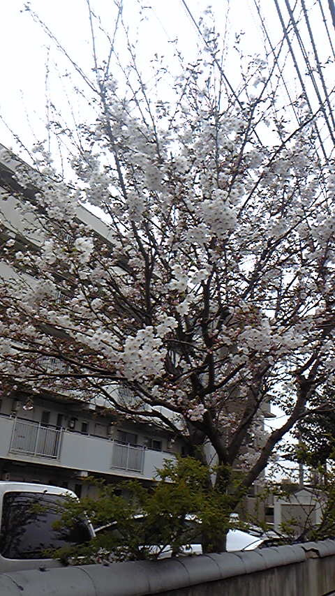 占い師響春のつぶやき-110407_121546.jpg