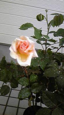 占い師響春のつぶやき-110510_081220.jpg