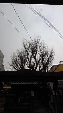 占い師響春(きょうしゅん)の開運話-120410_160608.jpg
