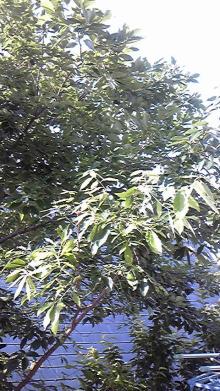 山口下関の占い師響春(きょうしゅん)の開運話-120622_074812.jpg