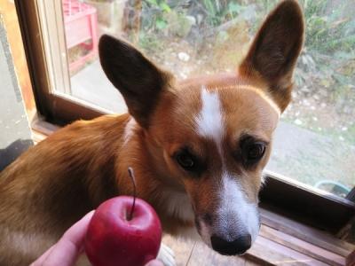りんごちゃんとワンコ
