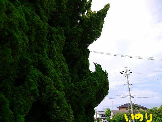 P1350713.jpg