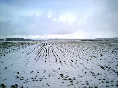 雪景色000019