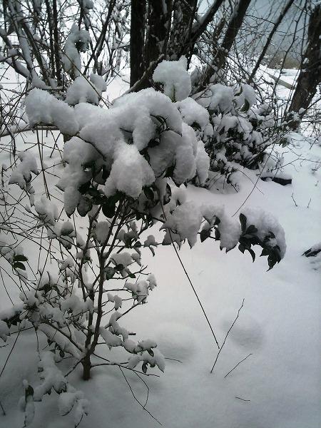 雪1000046