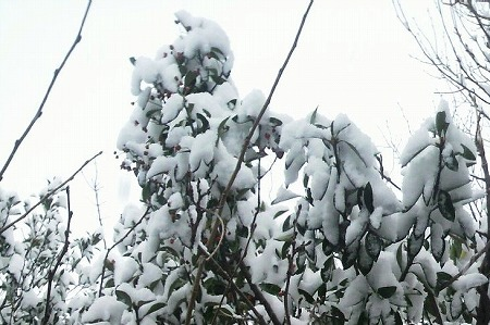 雪1000047