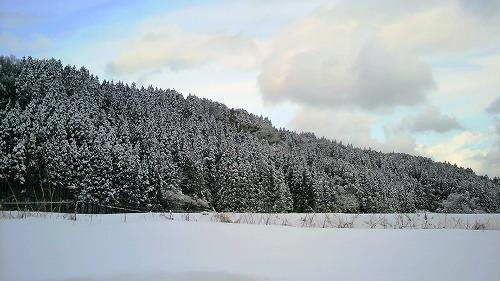 雪1000079