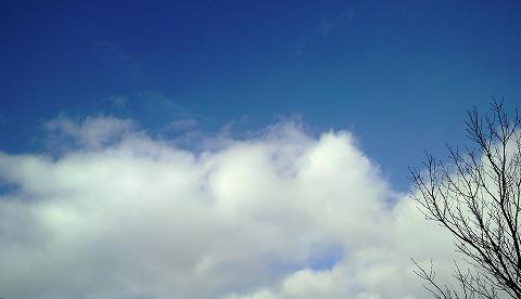 冬の青空1000110