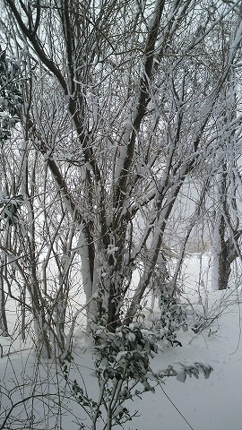 雪1000151