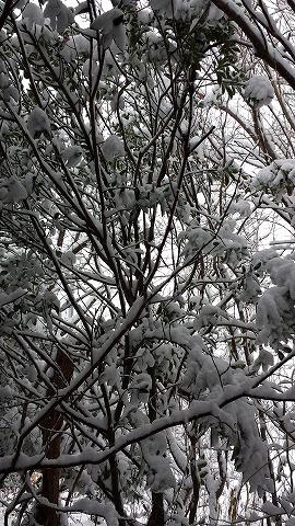 雪20141213_101543