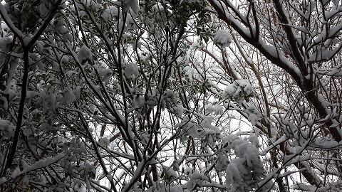 雪20141213_101546