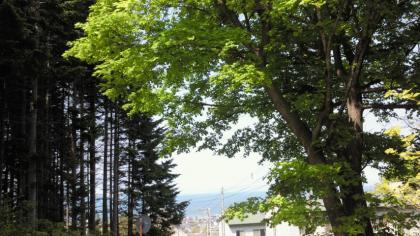 銭函の山の風景④