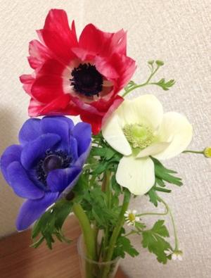 fc2blog_201401252056273c5.jpg