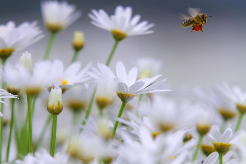 花粉団子を抱えて