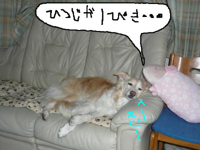 snap_katudon1121_20125010834.jpg