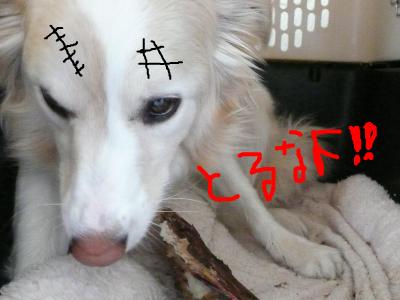 snap_katudon1121_201256105921.jpg
