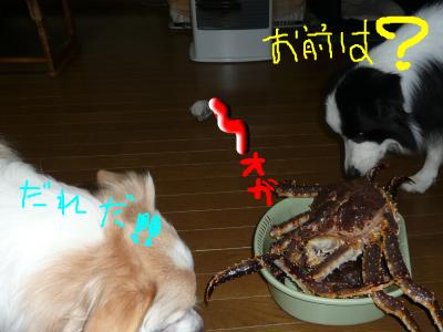 snap_katudon1121_20126083659.jpg