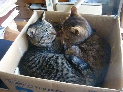 猫詰め段ボール