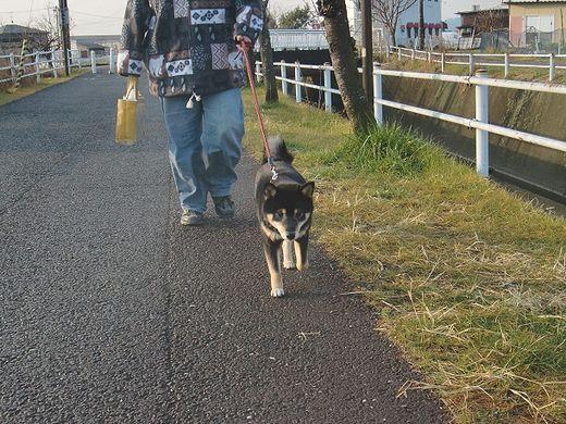 お散歩あんこ