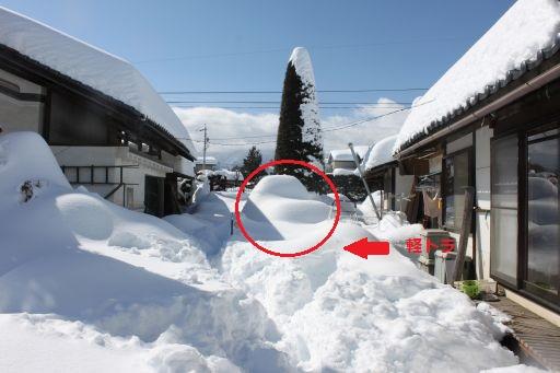 yukikeitora_512.jpg