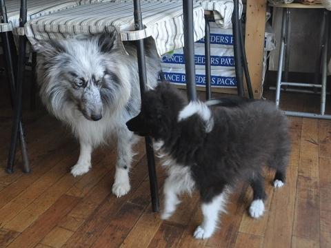 バイブラック子犬3