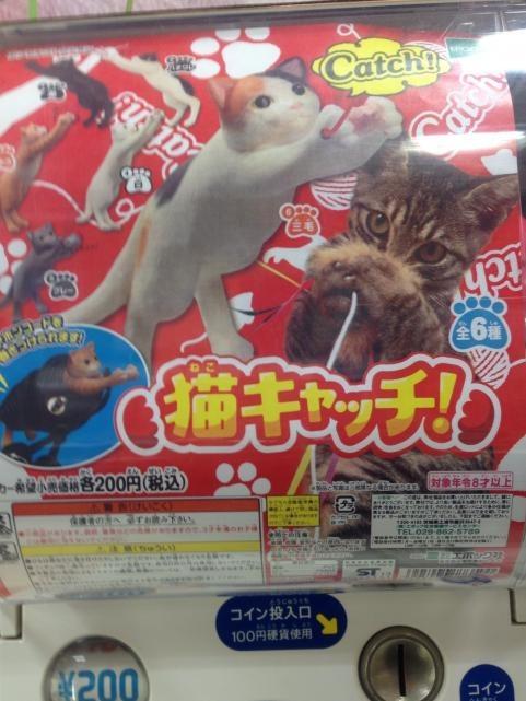 猫キャッチ1