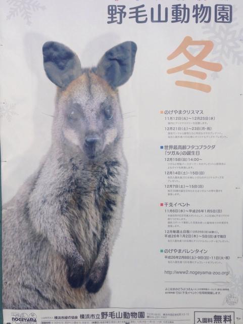野毛山動物園2014