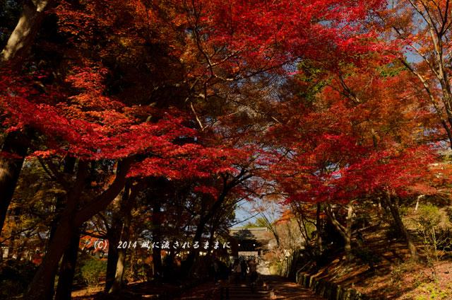 2013年 京都・毘沙門堂の紅葉11