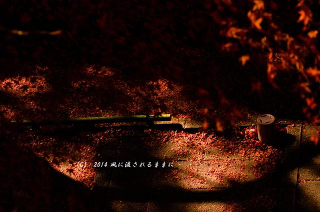 2013年 京都・毘沙門堂の紅葉7