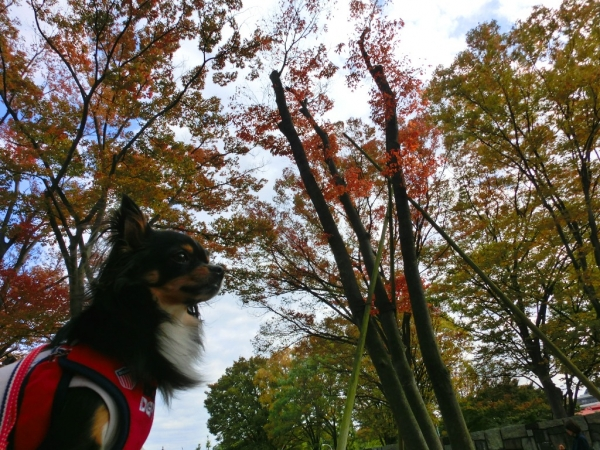 CIMG3319駒沢紅葉