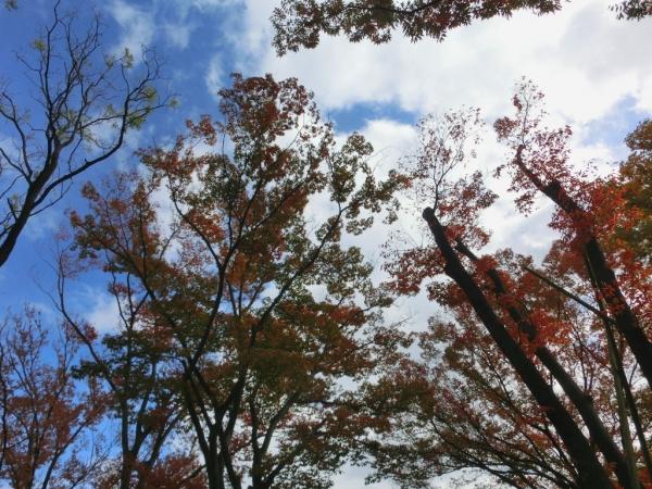 CIMG3318駒沢紅葉
