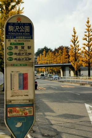 DSC06737駒沢紅葉