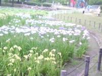J0010060_20120613145909.jpg