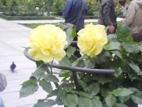 J0010201_20120607144627.jpg