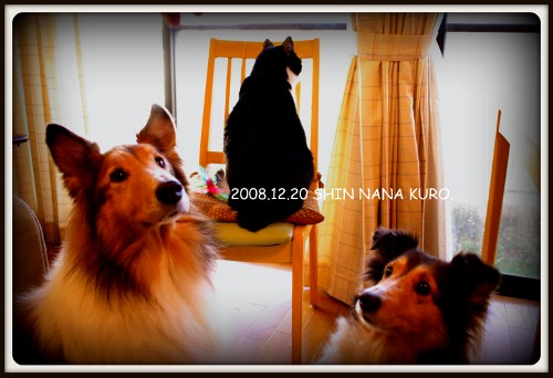 2008-12-20 15-12-23_0002 (500x342)