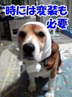 20130329_1.jpg