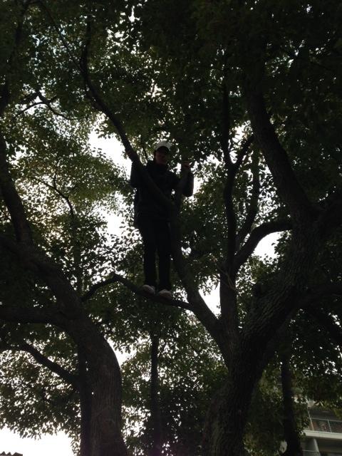 写真 tree