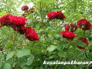 20120528081330ee3.jpg