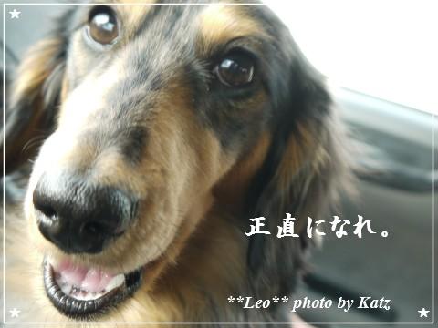 20120225 Leo (10)
