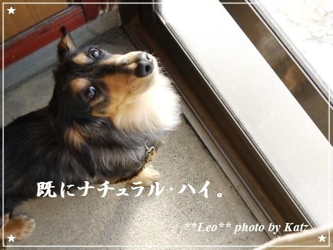 20120225 Leo (8)