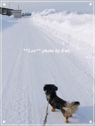 20120225 Leo (3)