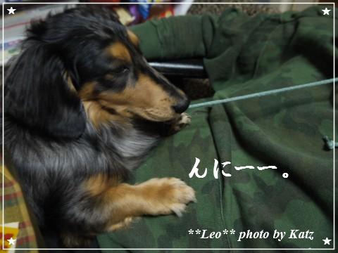 20120324 Leo (3)