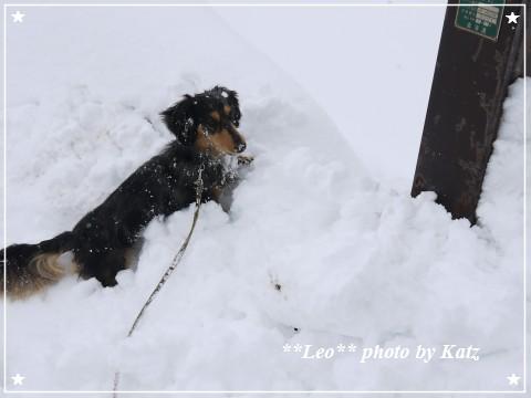20120407 Leo (9)