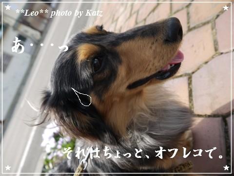 20120428 Leo (5)