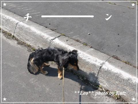 20120506 Leo (4)