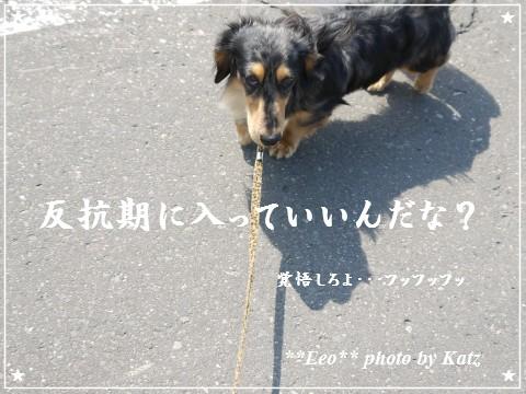 20120506 Leo (7)